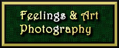 f&A Photography good